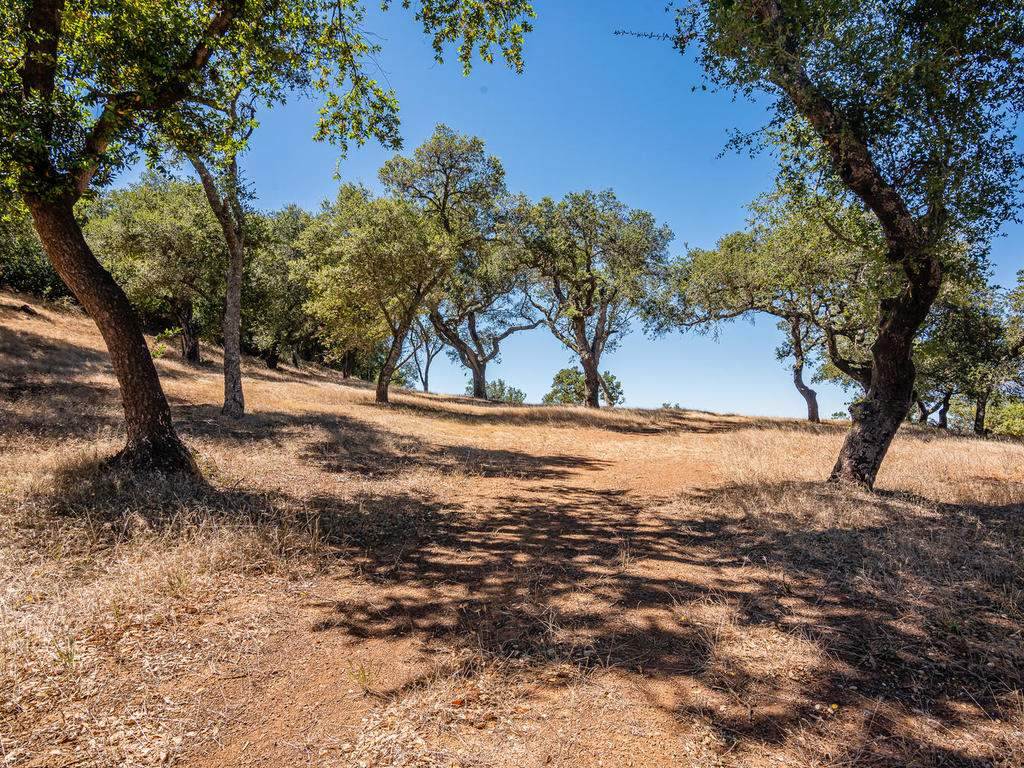14395-Thornton-Ct-Atascadero-011-009-Wooded-Area-MLS_Size
