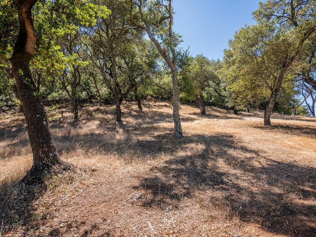 14395-Thornton-Ct-Atascadero-012-017-Wooded-Area-MLS_Size