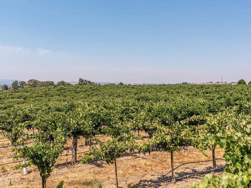 1785-Wellsona-Rd-Paso-Robles-056-054-Vineyard-Views-MLS_Size