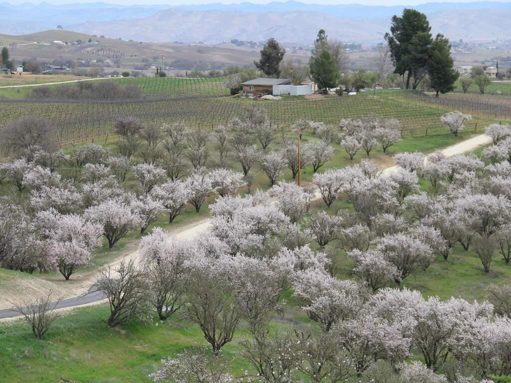 5495-Vista-Serrano-Paso-Robles-CA-93446-USA-114-202-Spring-MLS_Size