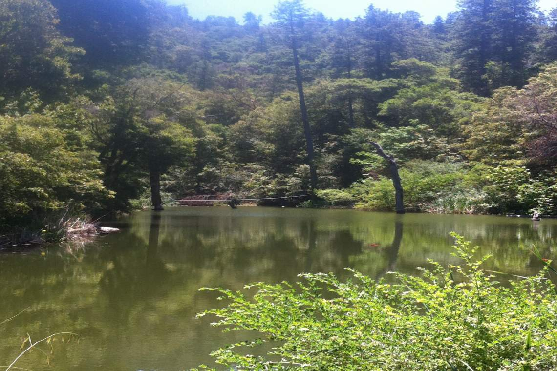 long-view-of-pond
