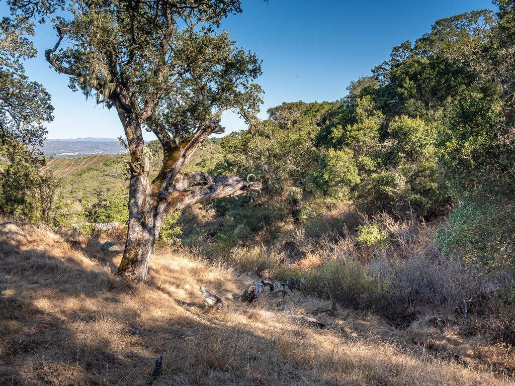 8330-San-Diego-Rd-Atascadero-014-014-Wooded-Property-MLS_Size